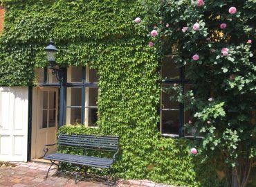 Innenhof eines alten Hauses, Sitzbank aus Holz vor Fenstern, darüber eine alte Laterne, die Hauswand mit Weinblättern bedeckt, rechts ein hoher Rosenstrauch mit rosa Blüten